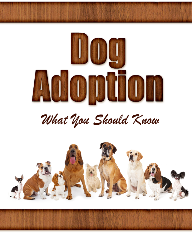 Dog Adoption What You Should Know