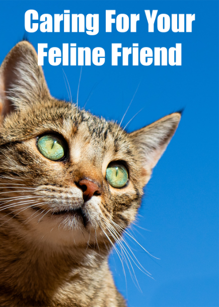Caring For Your Feline Friend