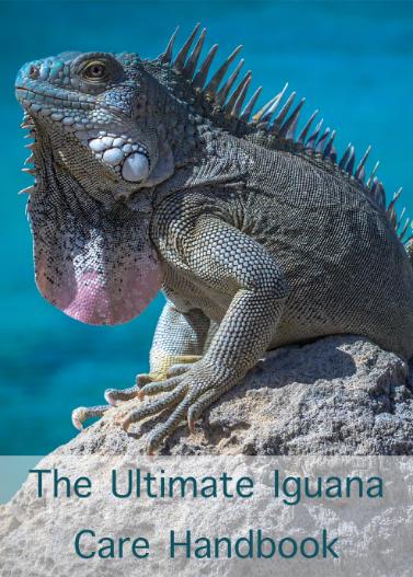 The Ultimate Iguana Care Handbook